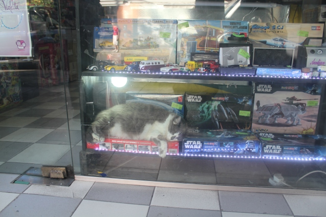 Display cat.