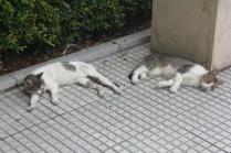 Symmetrical cats.