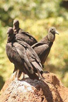 Evil birds.