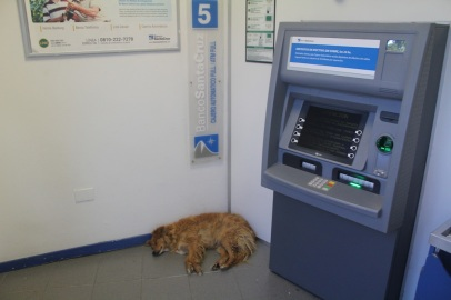 Dog wants money.