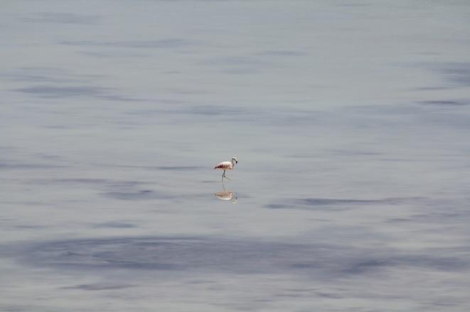 Lonely flamingo.