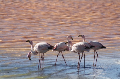 More flamingoes.