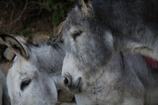 Donkey face.
