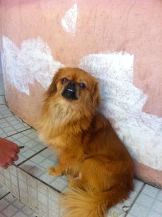 Silly dog, Peru