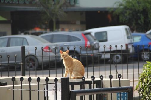 Cats in park, Lima, Peru