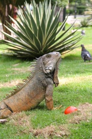 Parque de las Iguanas, Guayaquil, Ecuador