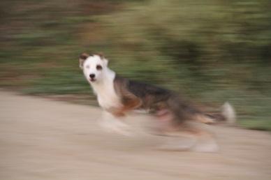 Dog, Ecuador