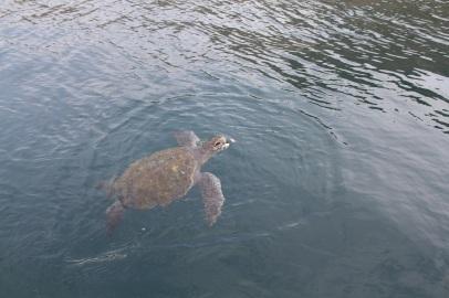 Turtle at Isla de la Plata, Ecuador
