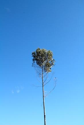 árbol.