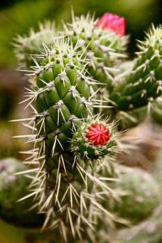 Cactus ecuador