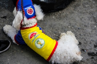 Dog wearing football colours, Popayán, Colombia