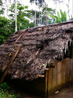Amazon jungle in Misahualli, Ecuador