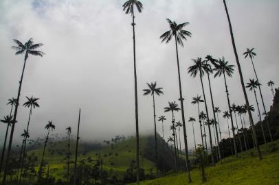 Valle Del Cocora, Salento, Colombia