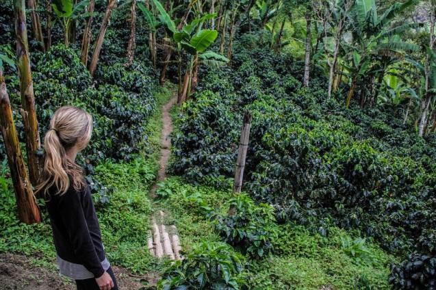 Coffee farm in Salento, Colombia