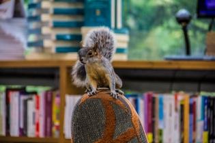 Squirrel in coffee shop, Mexico City
