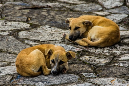 Dogs, San Cristóbal de las Casas, Mexico