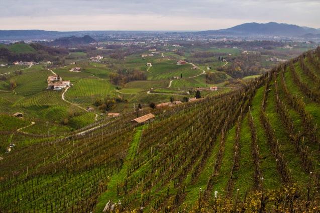 Valdobbiadene vineyards, Italy