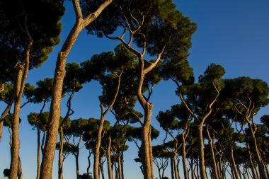 Trees, Rome, Italy