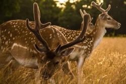 Old Deer Park, Richmond, London