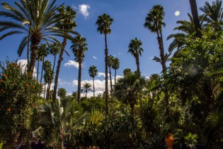 Majorelle Gardens.