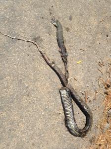 snake spain