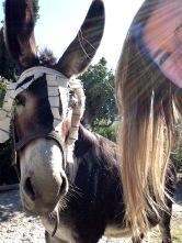 Donkey Orgiva