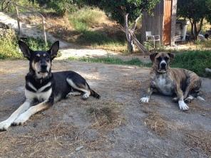 Dogs Orgiva