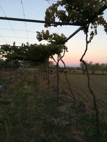 More vines.